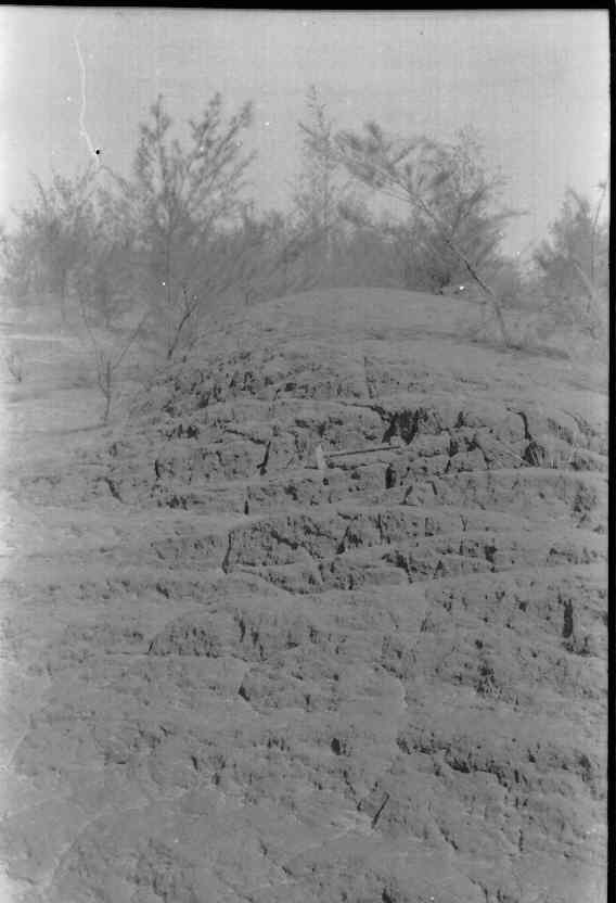 Note the primary bedding on the teri dune.