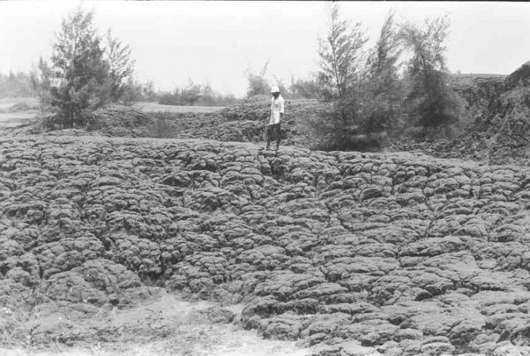 Box of cabbage like structure due to differential sinking caused by piping, 1978