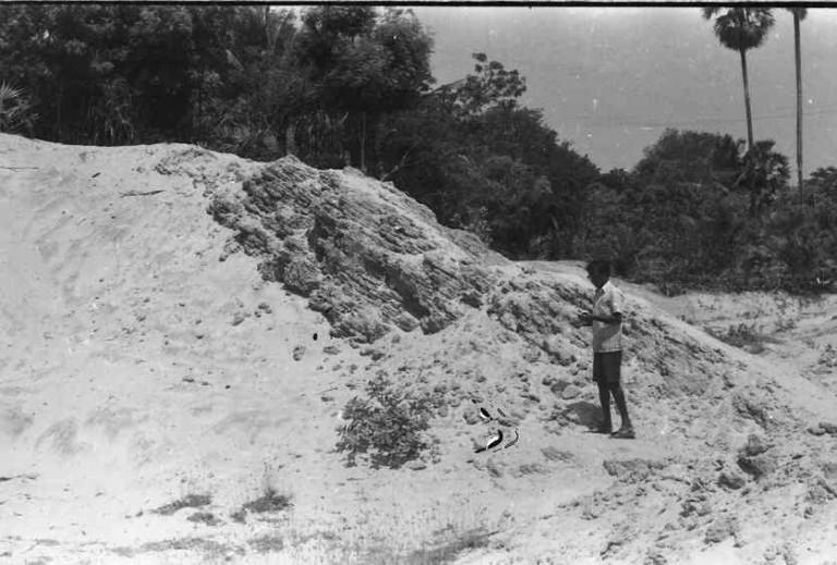 Prof.Ramasarma (1978) taking a curious look at the long fore-sets on a roadside exposure, Rajakamangalam, Kanyakumari, Tamil Nadu