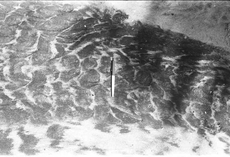 """A washover fan with ripples. Pen (4 """" long) for scale. The white sand occurs in the troughs between the ripple crests"""