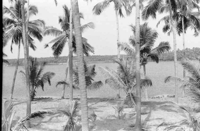 A view of Nadayara Kayal