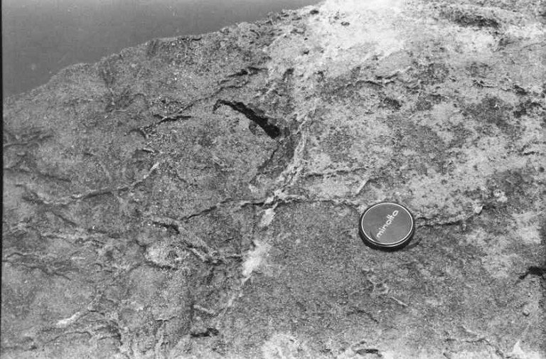 Trace fossils, Kovalam,