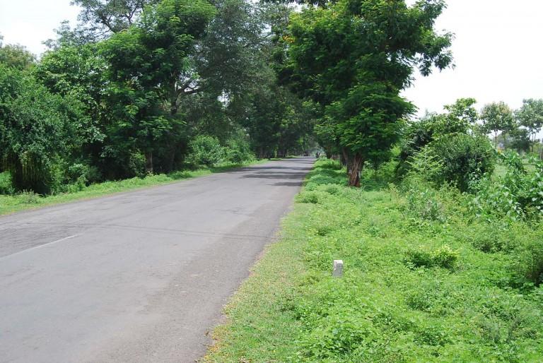Village roadside greenery