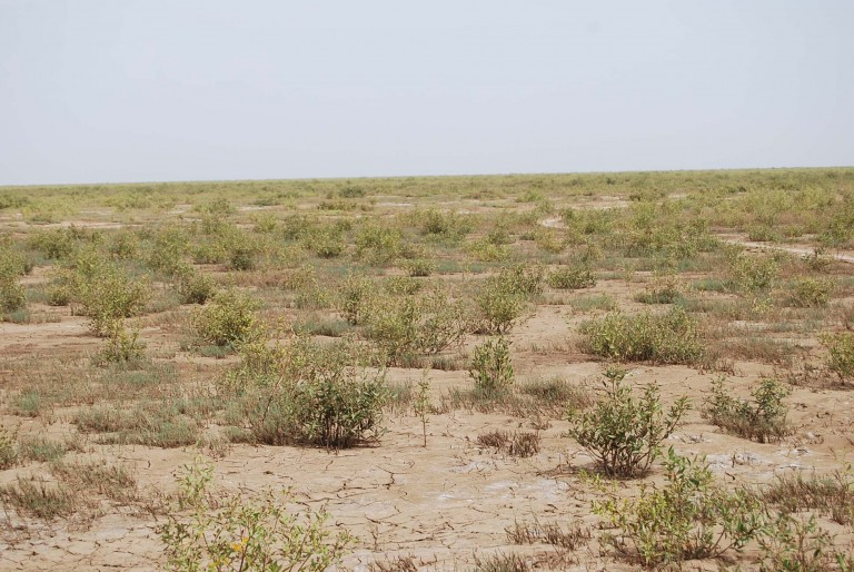 Intertidal flats of Kaach are desolate, monotonous and above all frightening.