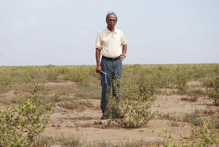 My friend Mr. Ravindran in the midst of a newly planted rhizopora field.