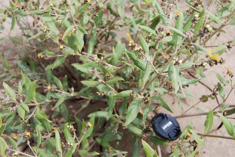 Closer look of rhizopora