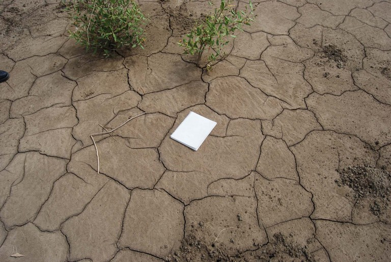Silty clay sediment develops desication cracks during the long exposure under two weeks.