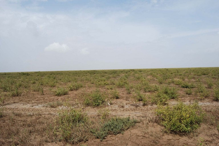 A panoramic view of the planted field.