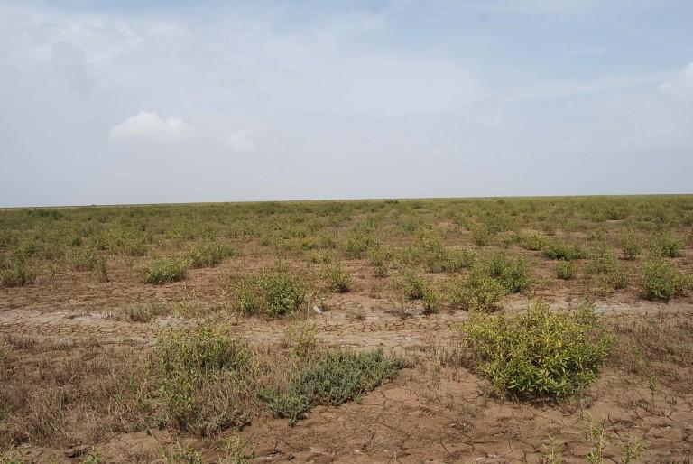 Newly planted tidal flat.