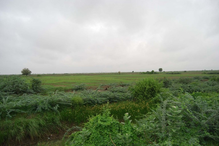 Newly planted area spreading the greenery of new crops.