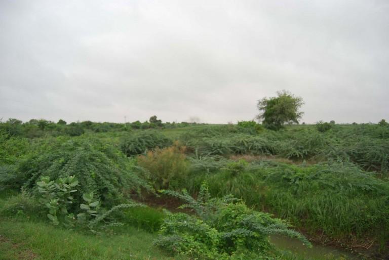 Monotonous greeish fields.
