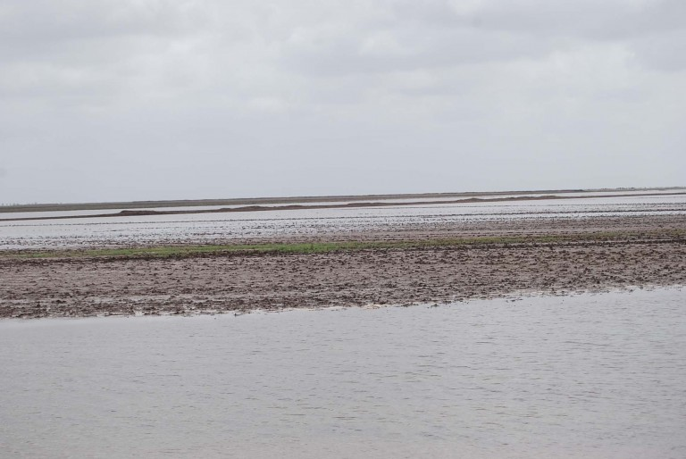 Another view at low tide - a tidal flat.
