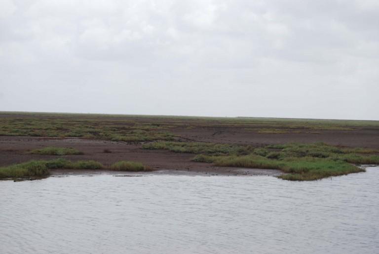 A tidal pool.