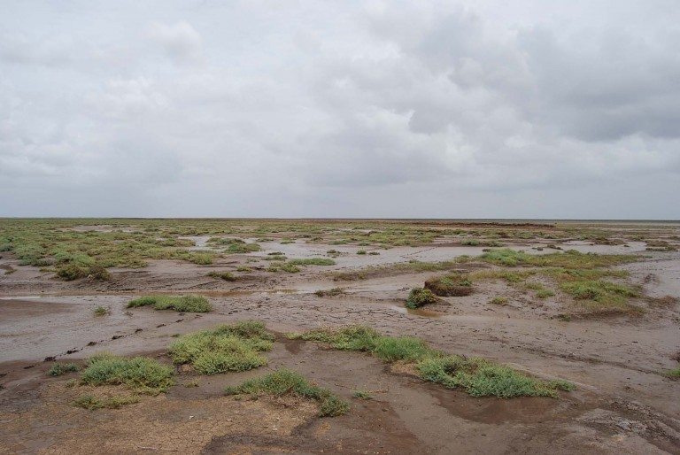 Low tide view of the tidal flat.