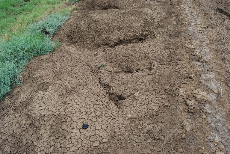 The dikes made of mud is very vulnerable to rain erosion and destruction.