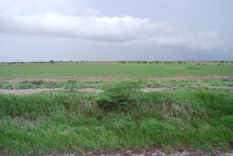 Planted fields in the mid ground.