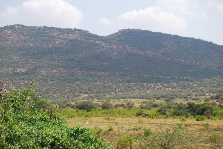 Western edge of quartzite ridge at Vallanad. Note the dipping quartz reef.