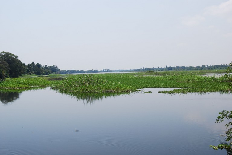 Agricultural residue entering the waters enhances the eutrophication.